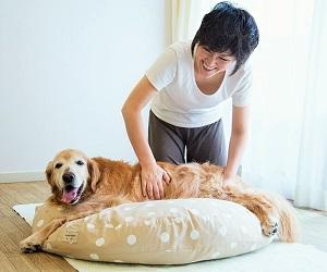 当院で愛犬のケアを(犬の整体)のイメージ