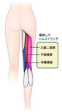 hamusuto1